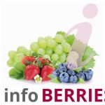 Los pequeños frutos: fresa, arándano, frambuesa, … cereza, higos, kiwi, tomate cherry, olivas