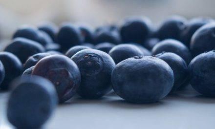 ¿Cómo lograr la máxima calidad en frutos de arándanos?