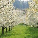 Preparación de suelo en frutales. Requisito fundamental para una producción sostenible en el tiempo