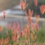 BASF firma un acuerdo para adquirir una parte adicional del negocio de semillas y fitosanitarios de Bayer