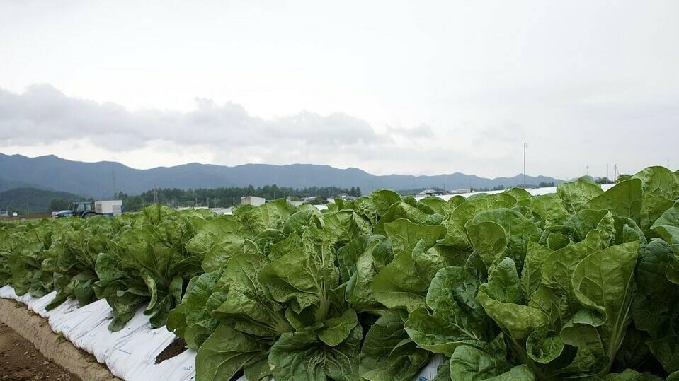 Innovación en la nueva formulación de los fungicidas que lanza Tradecorp: Asbelto y Candil