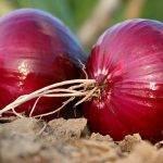 La Feria de la Alimentación Ecológica, ¡una visita indispensable para todos los agricultores!