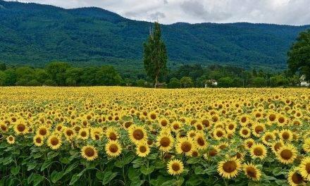Grupo Agrotecnología dona a ADIS productos fitosanitarios