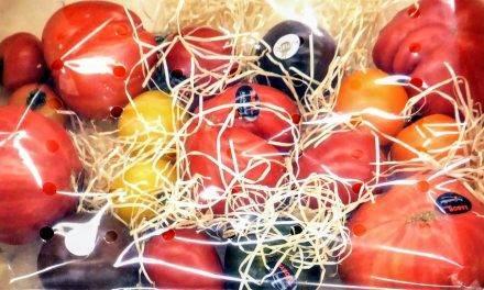 Tomates más sabrosos y nutritivos con menos riego