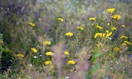 El desplazamiento de las malas hierbas y la invasión de nuevas especies debido alcambio climático