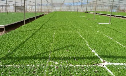Sustratos de 'Projar' para semilleros a medida de cultivos, climas y tecnologías