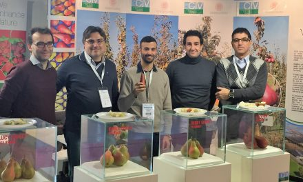 Advanced-stage test pear plantations thanks to the project UniBo University of Bologna – CIV Consorzio Italiano Vivaisti