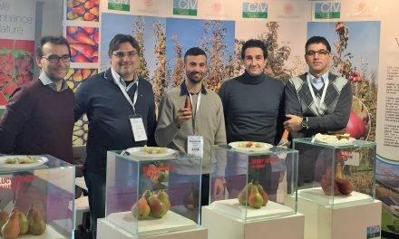 Advanced-stage test pear plantations thanks to the project UniBo University of Bologna – CIV Consorzio Italiano Vivaisti
