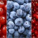 Envasado seguro e inteligente para berries