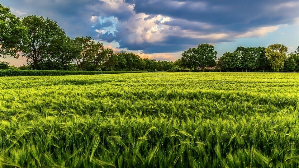BASF submits regulatory dossiers for two new herbicide active ingredients
