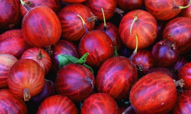 Cultivo y comercio de berries