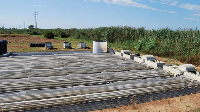 Bioproductos y bioenergía a partir de aguas residuales mediante microalgas
