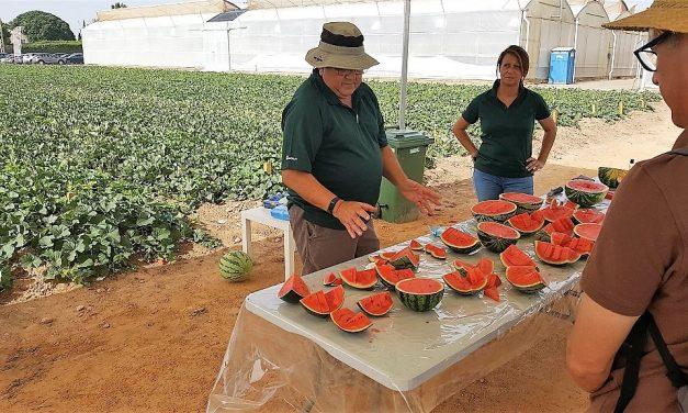 Más sabor y menos calibre, la fórmula de éxito de Nunhems® para satisfacer el mercado de melón y sandía