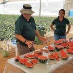 Más sabor y menos calibre en melones y sandías de Nunhems®