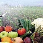 Los beneficios de la aplicación de peróxidos y/o peroxiacéticos
