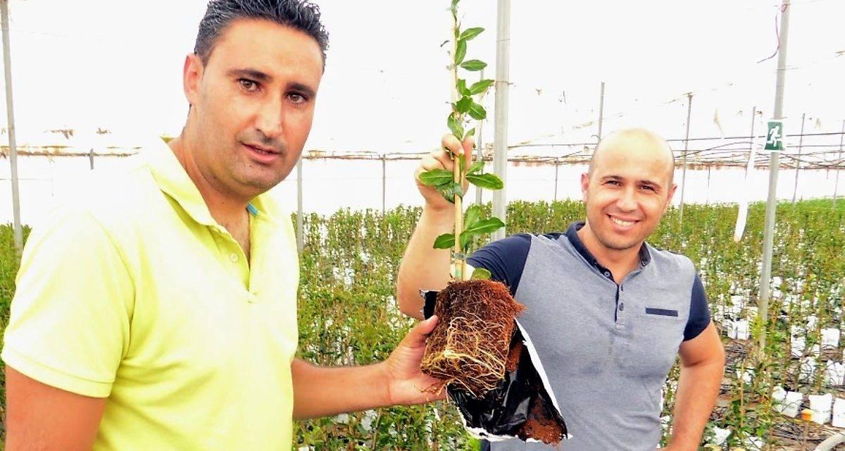 El decálogo de ventajas del cultivo hidropónico en sustrato de fibra de coco para plantas de vivero
