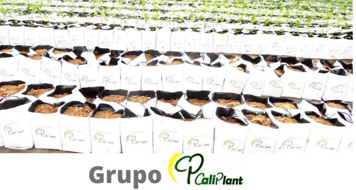 Grupo Caliplant