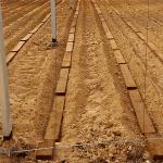 Sistema Mixto, el gran aliado del agricultor frente a los suelos difíciles