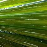 La gama de bioestimulantes agrícolas de microalgas AgriAlgae® hace promoción en las ferias hortofrutícolas