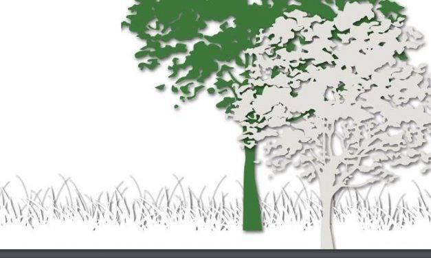 NEIKER y Tecnalia presentan soluciones inspiradas en la naturaleza para afrontar el cambio climático en el ámbito urbano