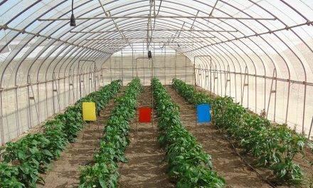 Ensayan con mallas fotoselectivas de sombreo para mejorar los frutos y evitar plagas en el Campo de Cartagena