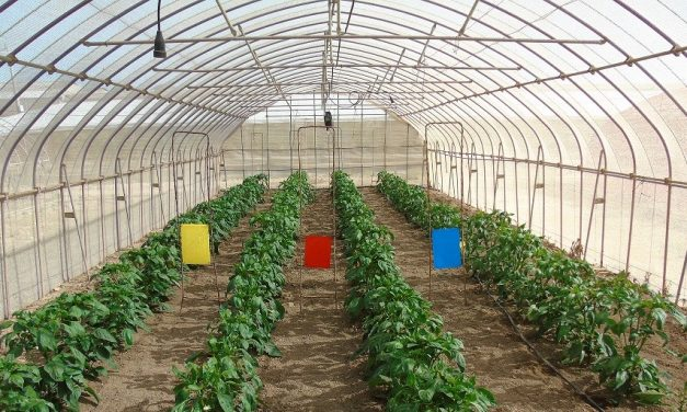 Ensayos con mallas fotoselectivas para mejorar frutos y evitar plagas en el Campo de Cartagena