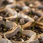El taller de empleo 'Benicarló en verd' visita el semillero de Benihort