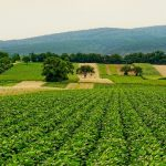 Alianza de organizaciones para una agricultura sostenible