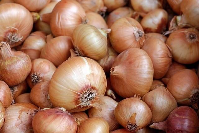 Importantes soluciones para cultivo y almacenamiento de cebolla
