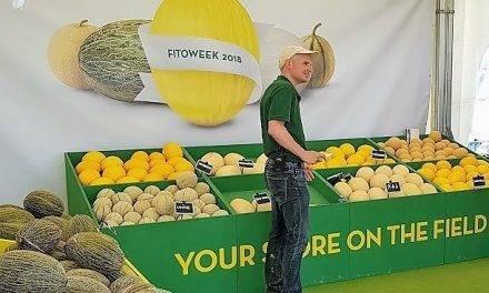 La FitóWeek unos días de campo internacionales para conocer 38 variedades de melón