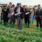 El futuro de la alimentación y la agricultura en la UE después 2020 ( II )