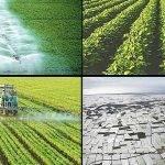 El futuro de la PAC, el medioambiente y el clima, incentivos para los agricultores ( I )