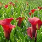 Florist Holland y HilverdaKooij se fusionan