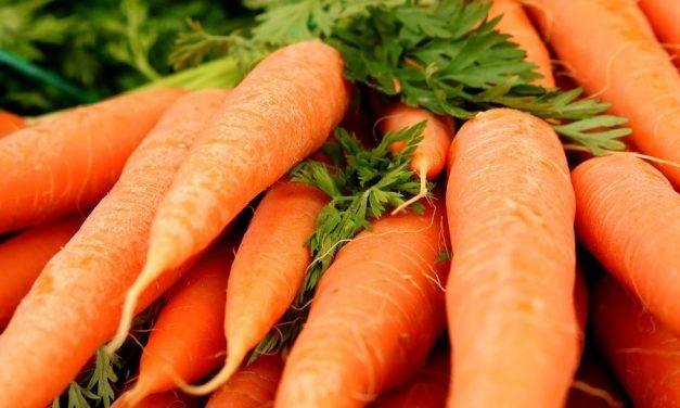 El tratamiento con ozono aumentó la vida útil de las zanahorias sin alterar el porcentaje de pérdida de peso, la firmeza y el color