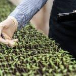 Gestión del riego y micorrización en cultivos agrícolas
