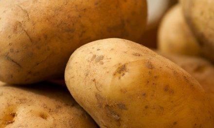 La dosis de Ca en patata