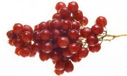 Reducción de la pudrición gris en uva de mesa