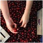 La competitividad del cerezo promovido por la D.O.P. Cereza del Jerte