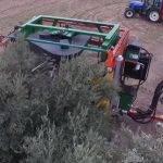 La cosechadora de la UCO abarata la recogida de la oliva