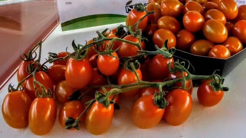 ¿Cómo quieres los tomates? Sabrosos, pequeños, diferenciados, personalizados y locales