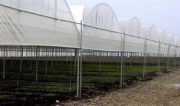 Agrotextiles de Arrigoni utilizados en tomate y pimiento