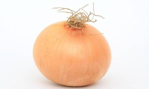Organia Revitasol en cebolla