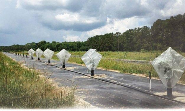 Cubiertas individuales de malla para defender los cítricos de Florida del HLB