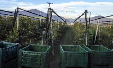 Mallas y la horticultura intensiva actual