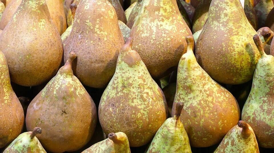 Mejoras en la producción de la pera de Rincón de Soto