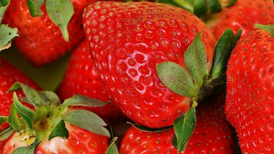 SO2 and MAP in strawberry postharvest allow a noticeable decrease in Botrytis development
