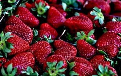 Inductores de resistencia a Botrytis cinerea en frutos de fresa poscosecha