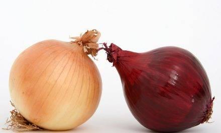 Selección de cebollas y otras frutas y hortalizas redondas