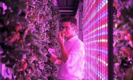 Nueva tecnología para cultivar fresas en EAU
