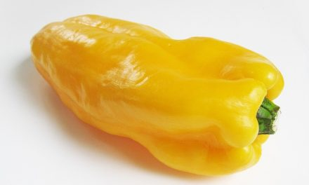 Postharvest UV-C light treatment reduces Rhizopus decay in yellow bell pepper